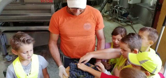Obisk sadjarske kmetije družine Trstenjak